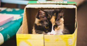 Transportbox für Katzen – Welche Größe ist richtig?