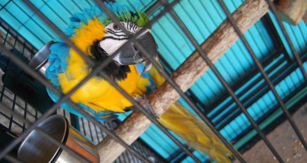 Praktisch und dekorativ: die richtige Einrichtung für Vogelkäfige