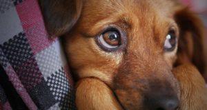 Was ist eine Hundebox?