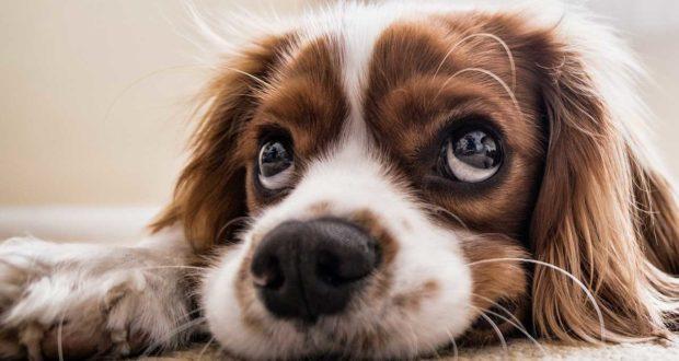 Was kostet eine Hundebox?