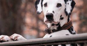 Welchen Hunde Zwinger brauche ich für meinen Hund?