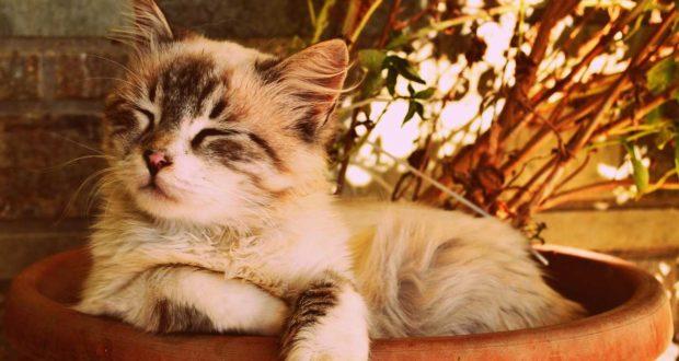 Wurmkur bei Katzen – wie funktioniert das?