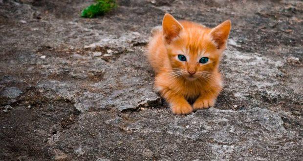 Wurmmittel für Katzen – was muss man beachten?
