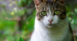 Zecken bei Katzen