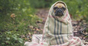 Zeckenschutz für den Hund